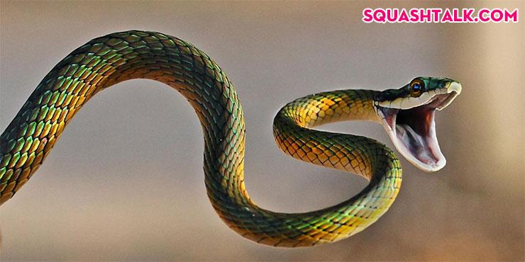 giải mã giấc mơ thấy rắn đánh con gì