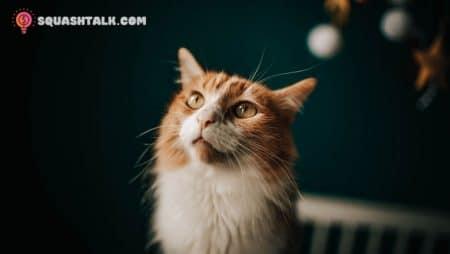 Giải mã giấc mơ thấy mèo đánh con gì hợp lý và chính xác