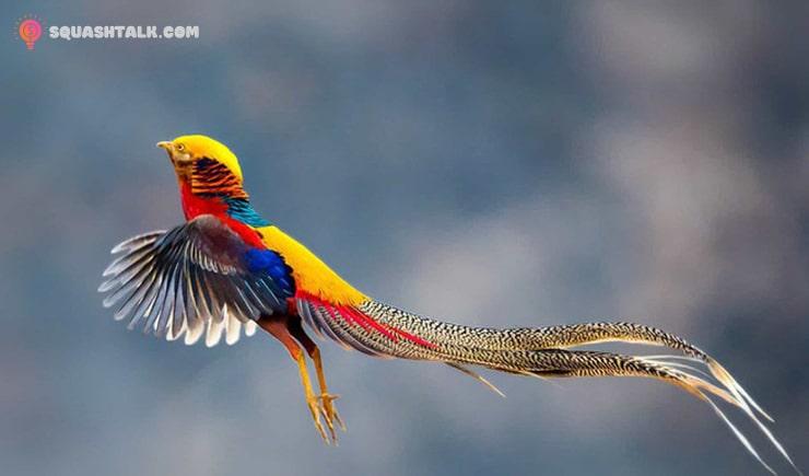 Mơ thấy chim đánh con gì trúng và ý nghĩa giấc mơ thấy chim
