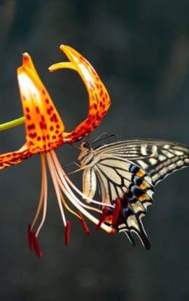 Giải đáp giấc mơ thấy bướm đánh con gì chính xác