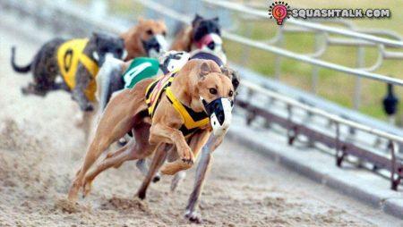 Cá cược đua chó trực tuyến – Mẹo và cách chơi đầy hấp dẫn